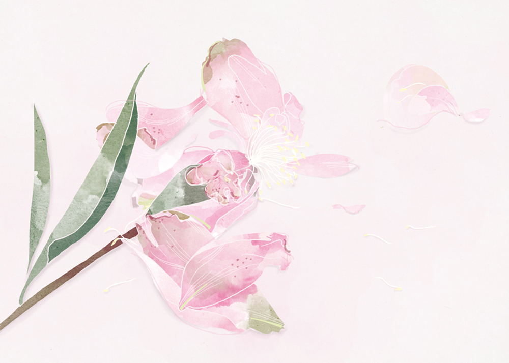 27_27-fleurs-fannees